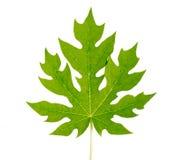 Grünes Blatt mit den Wassertropfen, lokalisiert auf weißem Hintergrund Lizenzfreies Stockfoto
