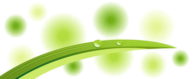 Grünes Blatt mit Dewdrops Stockbilder