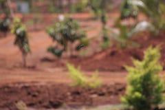 Grünes Blatt mit einem großen Wassertropfen Lizenzfreie Stockfotografie
