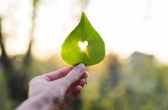 Grünes Blatt mit geschnittenem Herzen in einer Hand stockbild