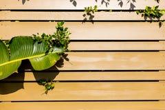 Grünes Blatt mit hölzernem Hintergrund der Sonnenbräune Stockfotos