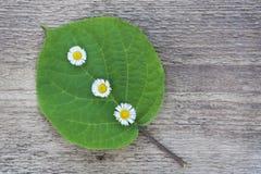Grünes Blatt mit kleinen weißen Blumen Stockbilder