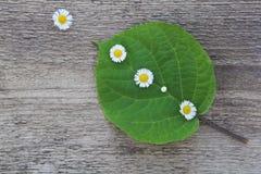 Grünes Blatt mit kleinen weißen Blumen Lizenzfreie Stockfotos
