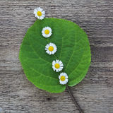 Grünes Blatt mit kleinen weißen Blumen Stockfotos