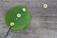 Grünes Blatt mit kleinen weißen Blumen Lizenzfreie Stockfotografie