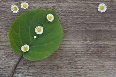 Grünes Blatt mit kleinen weißen Blumen auf einem hölzernen Hintergrund Stockbilder