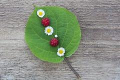 Grünes Blatt mit kleinen weißen Blumen und einigen Himbeeren Lizenzfreies Stockbild