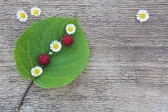 Grünes Blatt mit kleinen weißen Blumen und wenige Himbeeren Lizenzfreies Stockbild