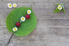 Grünes Blatt mit kleinen weißen Blumen und wenige Himbeeren Stockfoto