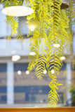 Grünes Blatt mit Licht reflektierte sich vom Caféfenster Lizenzfreie Stockfotos