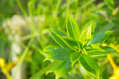 Grünes Blatt mit natürlichem Hintergrund Stockbild