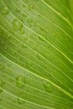 Grünes Blatt mit Regentröpfchen Stockbild