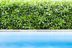 Grünes Blatt mit Swimmingpool Lizenzfreies Stockfoto