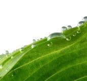Grünes Blatt mit Tropfen stockfotos