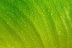 Grünes Blatt mit Tropfen Stockbilder
