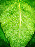 Grünes Blatt mit Tropfen Stockbild