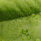 Grünes Blatt mit Tropfen Stockfoto
