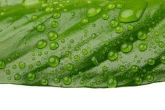 Grünes Blatt mit Tropfen Stockfotografie