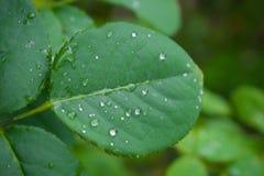Grünes Blatt mit Tropfen Lizenzfreie Stockfotografie