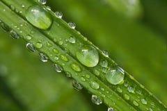 Grünes Blatt mit Tropfen des Regens Stockfotografie