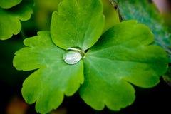 Grünes Blatt mit Tropfen des Wassers Lizenzfreie Stockbilder