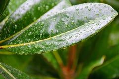 Grünes Blatt mit Tropfen von wate Stockfotografie