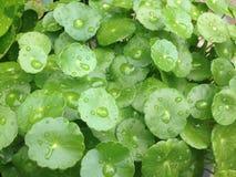 grünes Blatt mit Tropfenwasser Lizenzfreie Stockfotos