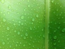 grünes Blatt mit Tropfenwasser Stockfotos