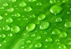 Grünes Blatt mit Wassertröpfchen Stockfotos
