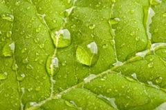 Grünes Blatt mit Wassertröpfchen Stockbild