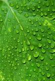 Grünes Blatt mit Wassertropfen Lizenzfreies Stockbild