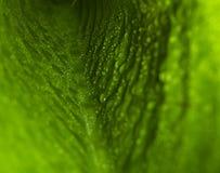 grünes Blatt mit Wassertropfen Stockbild