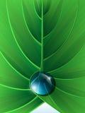 Grünes Blatt mit Wassertropfen nach innen Lizenzfreie Stockbilder