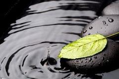 Grünes Blatt mit Zensteinen auf nassem Hintergrund Stockbilder