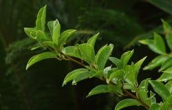 Grünes Blatt nach Regen stockbild