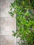 grünes Blatt Naturhintergrund mit Exemplarplatz lizenzfreies stockbild