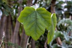Grünes Blatt und Bäume Stockfoto