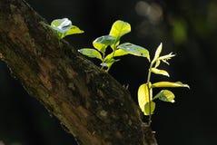 Grünes Blatt- und Baumkabel lizenzfreies stockfoto