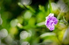 Grünes Blatt und Blume nach rainny Tag Lizenzfreies Stockbild