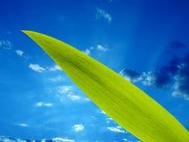 Grünes Blatt und der Himmel lizenzfreie stockfotografie