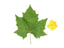 Grünes Blatt und gelbe Blume Lizenzfreie Stockfotografie