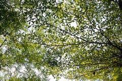 Grünes Blatt und Niederlassungen auf dem hellen Himmel stockfoto