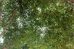 Grünes Blatt und Niederlassungen auf dem hellen Himmel stockbild
