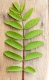 Grünes Blatt und Stiel auf Holz stockbilder