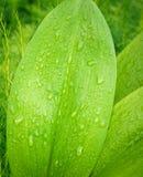 Grünes Blatt und Tropfen Lizenzfreies Stockfoto