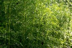 Grünes Blatt wenig Baumhintergrundbeschaffenheit Stockfoto