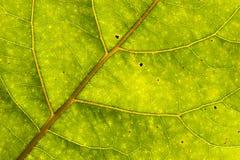 Grünes Blattdetail Stockfotografie