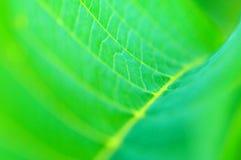 Grünes Blattdetail Stockfoto