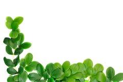 Grünes Blattfeld Stockfotos