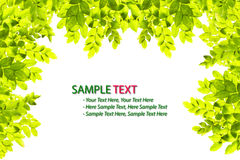 Grünes Blattfeld getrennt Stockfoto